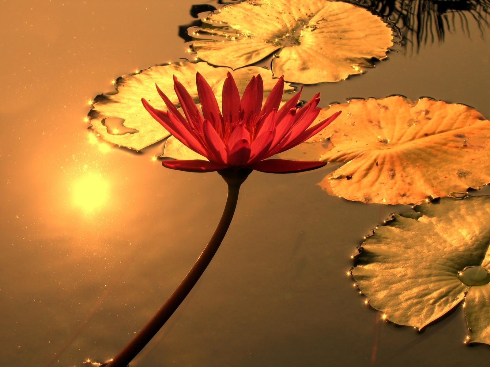 Workshopreihe: Yoga und Emotionen – Wegweiser durch stürmische Zeiten – 5. Teil: Selbstzuwendung praktizieren